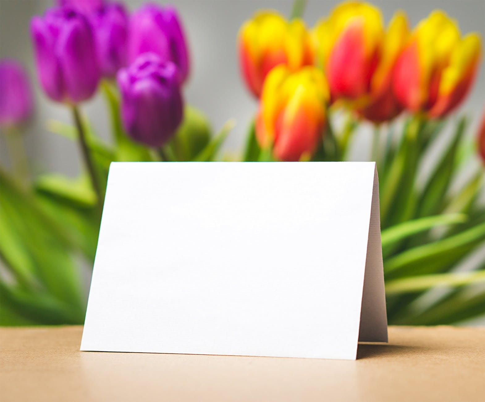 beautiful blank blooming blur