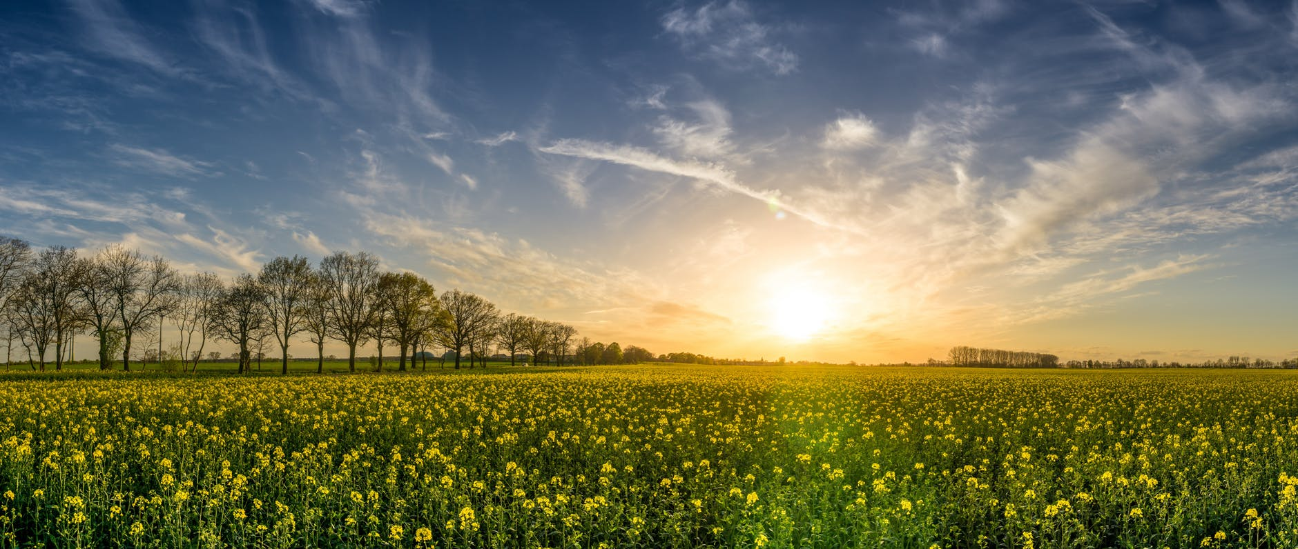 agriculture bloom blossom clouds